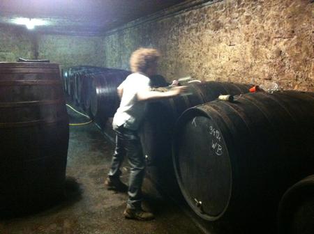 johannes_cellar