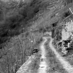palmberg_path_stein