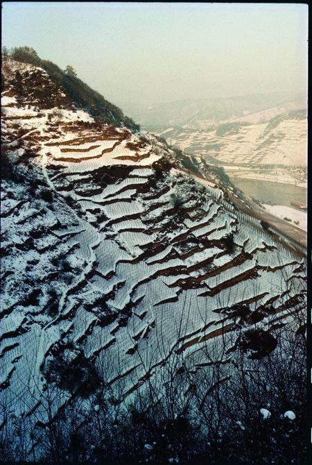 Palmberg im Winter